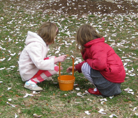 Children collect tree flower petals for potions.