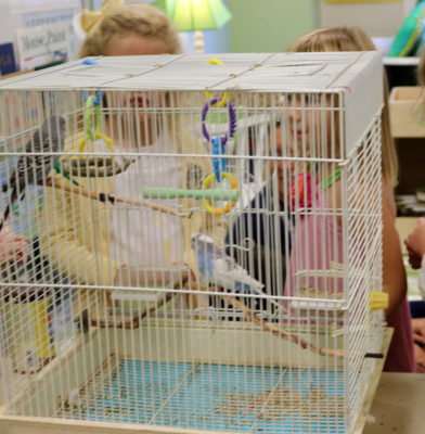"""In Mrs. Jernigan's Kindergarten classroom the children found two birds (Barefoot and Blue Jeans…or, as Honor told someone later, """"Blue Pants"""")."""