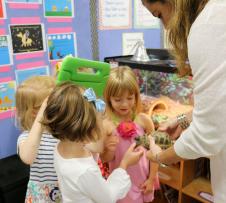 """In Mrs. Wilbur's classroom, the children met """"Shelly,"""" a Russian tortoise. Mrs. Wilbur graciously took Shelly out to visit for a bit. pet-book-project-vi-10-8-15"""