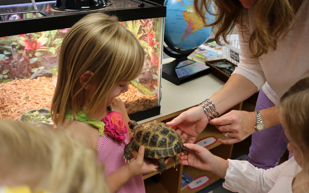 """""""What's Being Learned Here?"""": The Class Pets Project"""